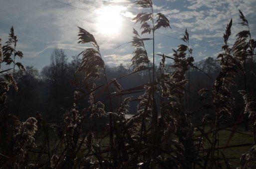 Sonne und Rauhreif